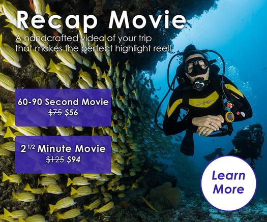 URLIFE Recap Movie
